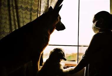 A las mascotas también les afecta el encierro