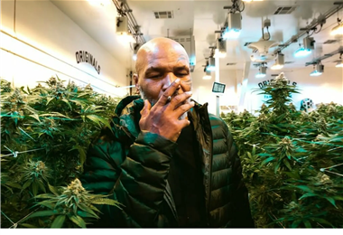 MIke Tyson consume bastante cannabis