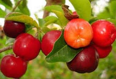 Las frutas de temporada refuerzan las defensas del organismo