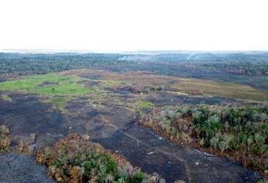Incendios arrasan casi seis mil hectáreas de bosque