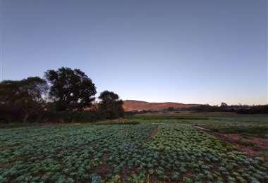 En la zona de los valles se producen más 40.000 hectáreas entre hortalizas, frutas y verduras/Foto: Juan Carlos Aguilar