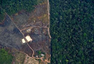 Supermercados británicos amenazan con boicot a Brasil por la deforestación