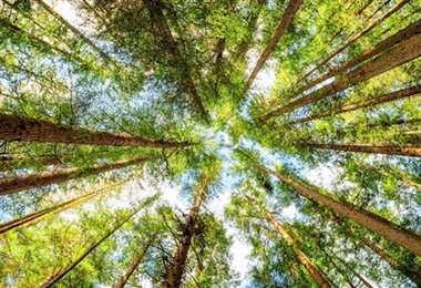 Los bosques tropicales podrían expulsar carbono con el cambio climático