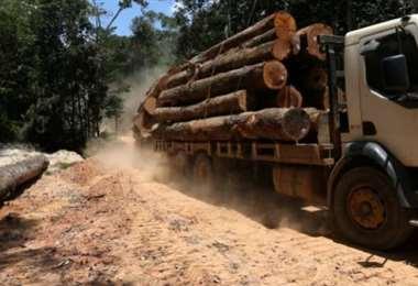 La deforestación no se detiene en la región. Foto Internet