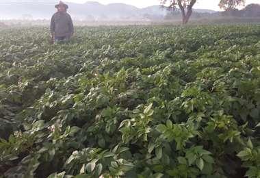 Los productores que siguieron recomendaciones de protección de cultivos no sufrieron daños mayores, según la Gobernación