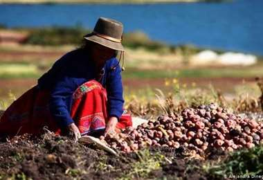 FMI acude a un préstamo a Perú