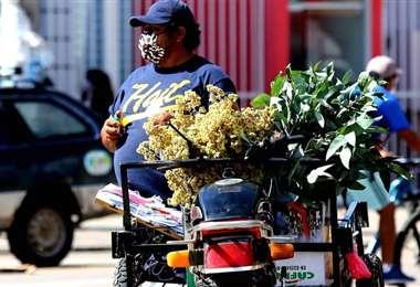 La gente sale a las calles a ofrecer estas plantas medicinales