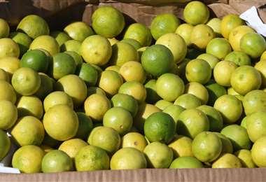La gente también busca mucho limón. Se los consigue a Bs 1 la unidad