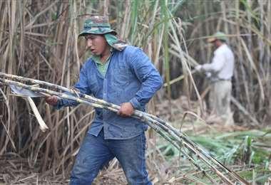 La industria azucarera genera más de 50.000 fuentes de empleo /Foto: Fuad Landívar