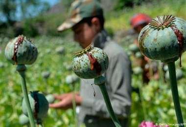 Narcos tienen alternativas para traficar droga