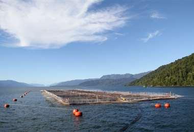 Centro de cultivos salmones en Chile. Foto Internet