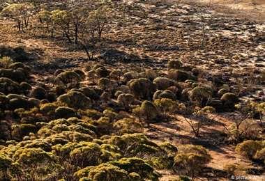 Los aborígenes se manifiestan contra la deforestación