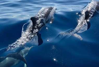 Dos cetáceos en el Mediterráneo. Foto AFP