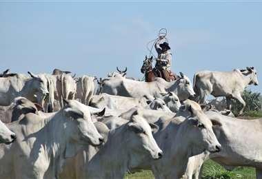 China es el principal destino de la producción local. Foto: Fuad Landívar