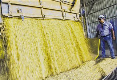 Soya. En la cosecha de verano de este año se logró producir 1.964.000 toneladas. Foto. Jorge Uechi