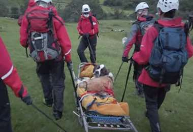La perra rescatada. Foto Internet
