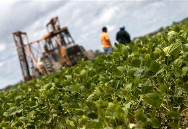 El sector agrícola advierte riesgo en la producción de alimentos /Foto: Hernán Virgo