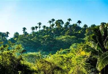 La selva es uno de los mayores atractivos turísticos que tiene Bolivia
