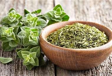 El orégano es una planta con muchos usos medicinales