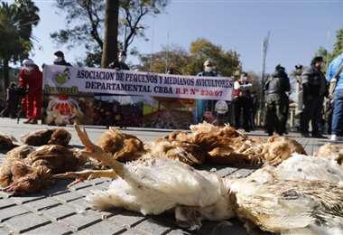 Por falta de alimentos los pollos se comen entre ellos (Foto: David Flores, APG Noticias)