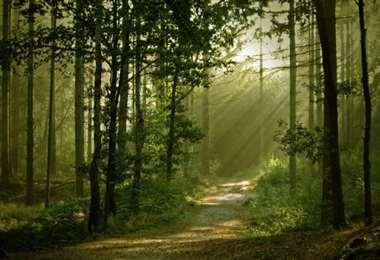 Buscan restituir la naturaleza salvaje. Foto Internet