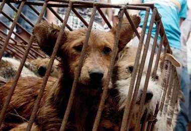 Los perros cuestionados en Corea del Norte. Foto La Nación