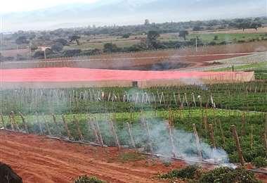 Para evitar que la helada dañe los cultivos, la Gobernación recomienda a los productores activar fuego para el humo evite que el frío queme los cultivos