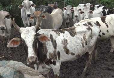 Las autoridades dieron recomendaciones para cuidar a los animales