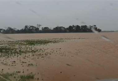 Los efectos de las lluvias son notorios en los campos de soya /Foto: Productores