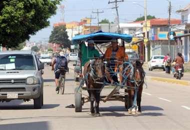 Los caballos ya están protegidos por ley municipal