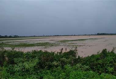 Las lluvias dejaron en estas condiciones parcelas de soya en el norte /Foto: Productores
