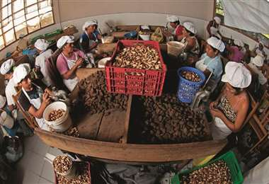 La recolección de almendras es la principal fuente de ingreso en la Amazonía /Foto: AFP