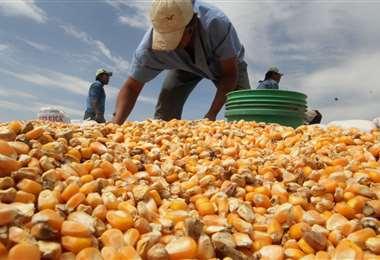 Los productores advierten riesgo en la seguridad alimentaria