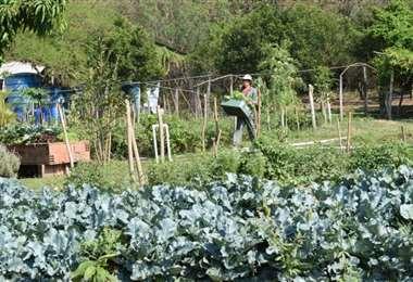 La Plataforma defiende la producción agroecológica en el país /Foto: Probioma
