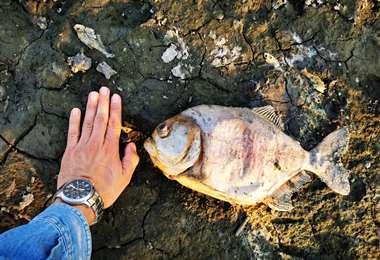 Una guardaparque alertó sobre la demanda de peces. La Gobernación comenzó a actuar