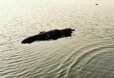 Reptil en la laguna Concepción