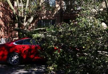 Un árbol caído tras el paso de Isaías por Astoria, en Nueva York. Foto AFP