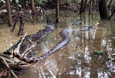 Foto: Universidad de la Amazonia