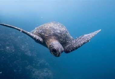La reserva marina de las Galápagos cuenta con más de 2.900 especies diferentes