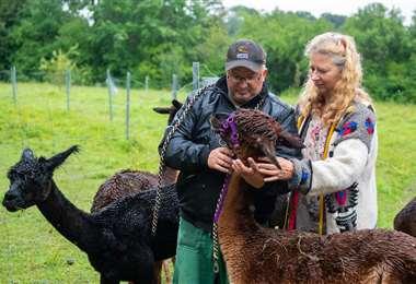 Silke Lederbogen líder de un programa para delincuentes y su paciente le ponen un cabestro a una alpaca. Foto AFP