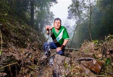 En Bolivia algo más de la mitad del territorio del país, es decir 52,5 millones de hectáreas, están cubiertas de bosques,