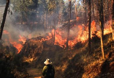 El incendio en el municipio cusqueño de Ocongate arrasó con unos 500 árboles de pino. Foto. Andina.pe