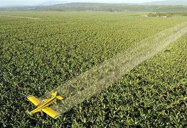 El uso de pesticidas prohibidos va en aumento. Foto Internet