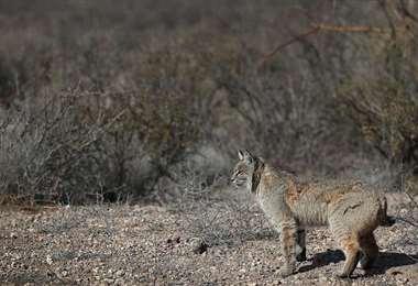 La biodiversidad en constante peligro. Foto Internet