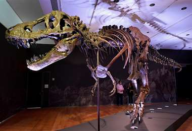 El T-Rex a subasta. Foto AFP