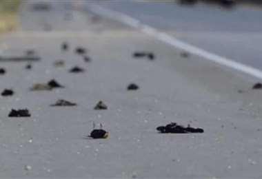 Pájaros muertos en una carretera de Nuevo México. Foto Internet