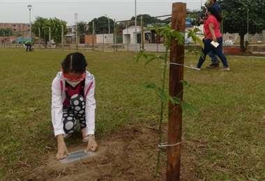 Cada árbol tiene una placa que lo identifica