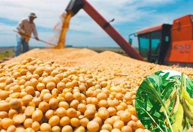Los productos derivaos de la soya componen buena parte de las exportaciones cruceñas