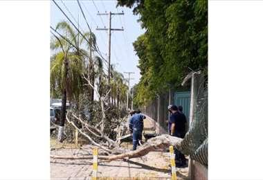 Caídas de árboles y letreros por los vientos provocan cortes de energía. Foto: CRE