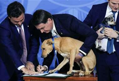 El mandatario sostiene a su perro durante la firma de la ley. Foto AFP